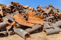 Heap of cork tree bark as raw material