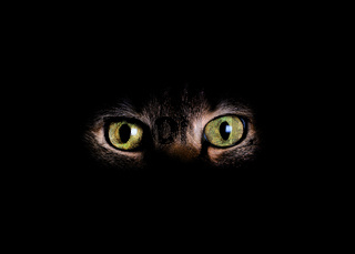 Animal eyes and face in dark background