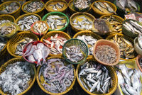 fresh fish and seafood market stall display in xiamen china