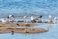 Shorebirds on a sandy beach by the sea