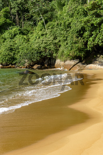 Deserted beach meeting the rainforest