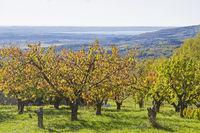 Herbst in den Monti Lessini