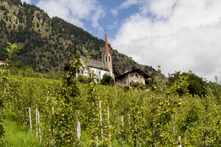 Apfelbäume in Südtirol, Italien, apple trees in south tyrol, italy