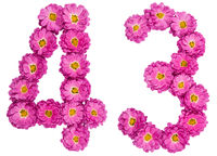 Arabic numeral 43, forty three, from flowers of chrysanthemum, isolated on white background