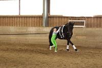 Aufstieg auf Pferd im Galopp