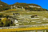 Chasselas Rebstöcke in terrassierte Steillagen im Weinberg Aigle les Murailles, Aigle, Schweiz