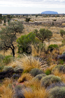 wilderness environment in the landscape outback