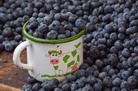 Fresh ripe blueberry berries in old metal mug