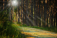 sunrays over footpath in the woods