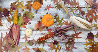 Seasonal Autumn foliage and decorations on rustic white wooden boards in flay lay format