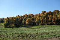 Mischwald im Herbst, mixed forest in autumn