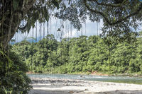Amazon, View of the tropical rainforest, Rio Napo, Misahualli, Ecuador