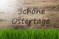 Sunny Wooden Background, Gras, Schoene Ostertage Means Happy Easter
