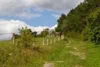 Wiesenweg im Harz