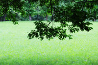 green foliage with tree branch on grass background in park.