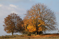 Herbstbäume, Schwäbische Alb, Baden-Württemberg