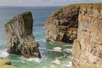 UK Pembrokeshire Elegug Stacks