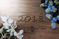 Sunny Crocus And Hyacinth, Text 2018