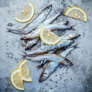 Fresh catch Shishamo fish fully eggs flat lay on shabby metal background. Shishamo fish is popular fish for Japanese cuisine cooking Tempura. Fresh Shishamo fish tempts buyers at fresh seafood stall.