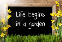 Sunny Spring Narcissus, Chalkboard, Text Life Begins In A Garden