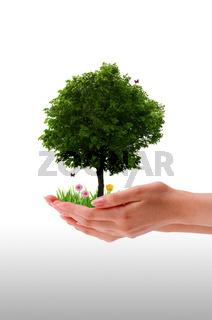 Tree - Hand