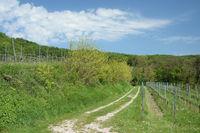 Weg in Weinbergen am Kaiserstuhl