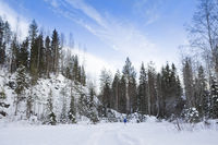 Winter landscape with snow and fir tree