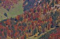 Colorful autumn forest in the Toggenburg valley, Swiss Alps.