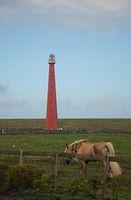 Pferd am Leuchtturm von Den Helder