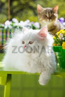 Katzen am Balkon