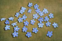 Blüten von Vergissmeinnicht mit texturiertem Hintergrund