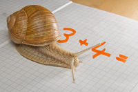 Berechnungs-Schnecke / Calculating Snail