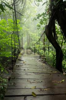 Old suspension bridge in rainforest