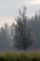 Bäume im Vorland