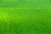 aerial view on green agriculture field