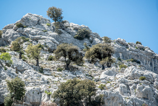 Olivenhaine am Pass Genna Silana, Sardinien