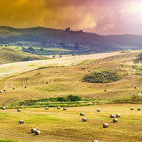 Straw bales after harvest in Sicily.