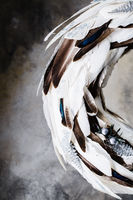 Christmas wreath of feathers on a gray background with divorces
