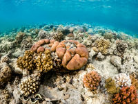 Coral garden in red sea, Marsa Alam, Egypt