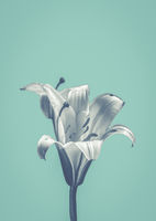 Flower On Blue Design