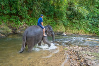 Small elephant with his trainer on the back walks in tropical river
