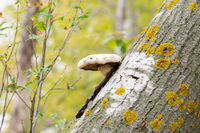Fungus on a broken tree