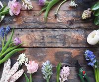 Ranunculus, tulip, geotsint flowers on wooden background