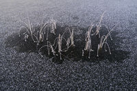 Schilf in einem gefrorenen See, Lappland