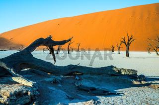 Ecotourism in Namib-Naukluft Park