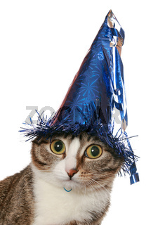 Funny cat with expressive eyes in a festive hat