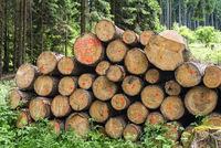 Symbolfoto Forstwirtschaft