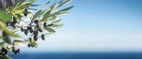 Olivenzweig am Meer