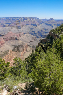 Grand Canyon and trees