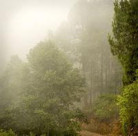 Misty Forest Guatemala